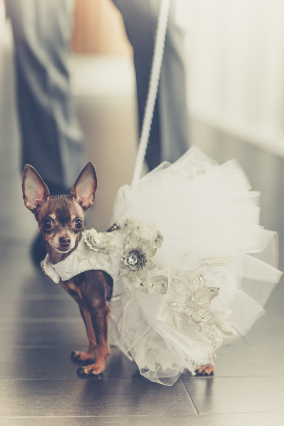 Published wedding photographer toronto toronto wedding for Wedding dress for dog