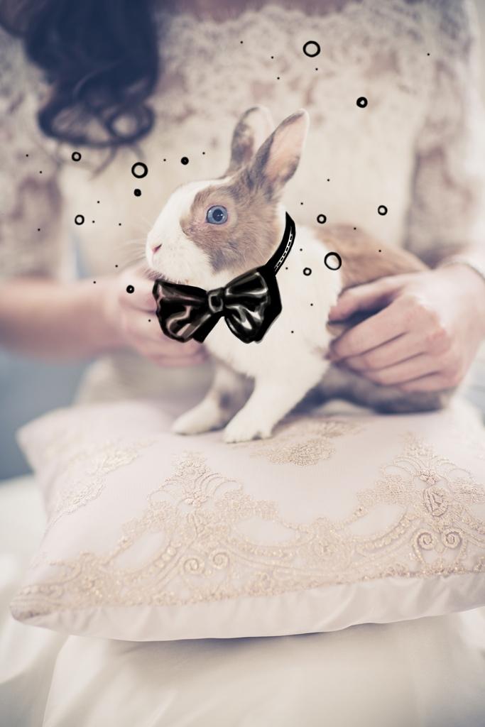 Bride and bunny Sunnybrook