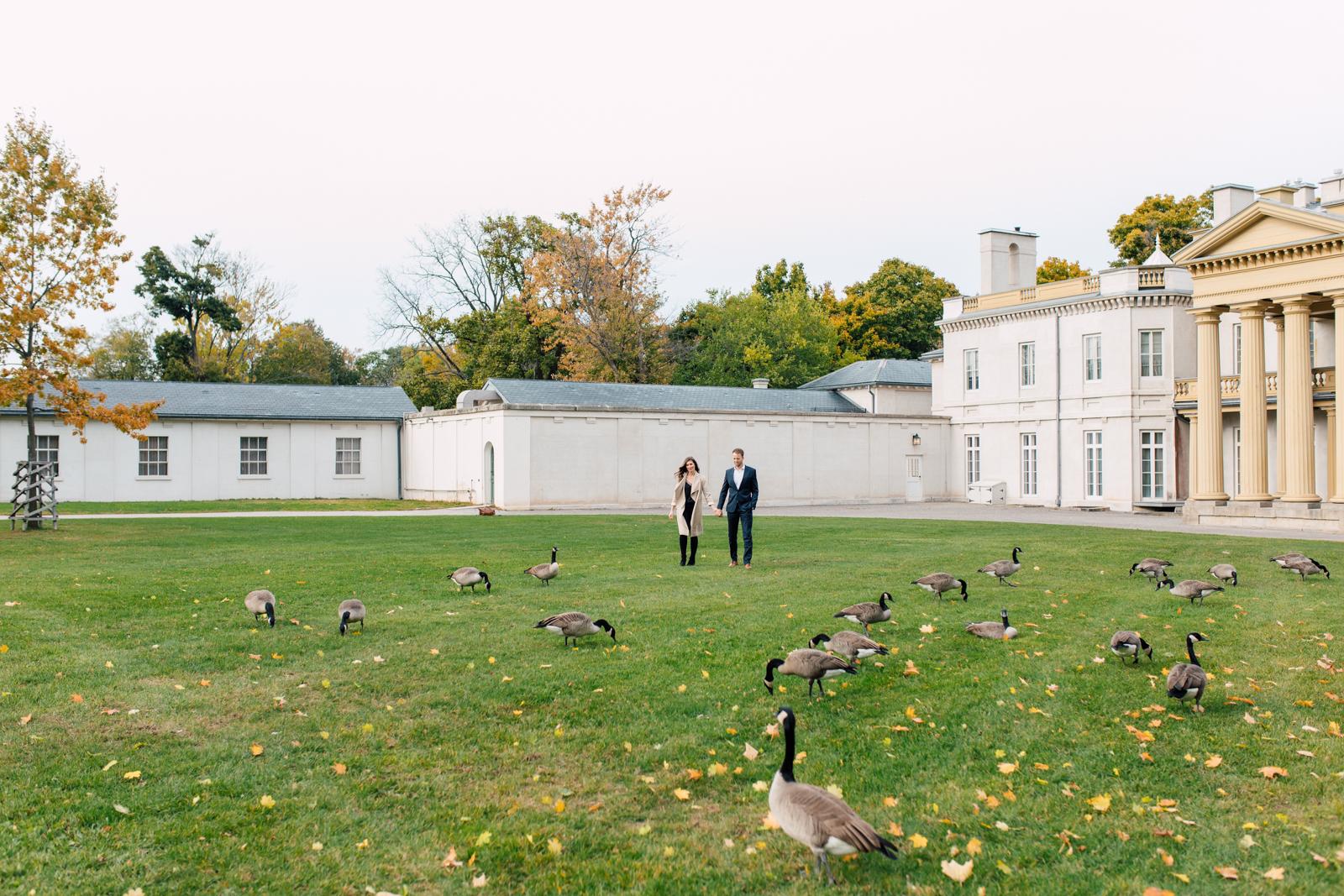 canada goose engagement